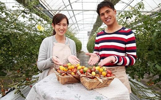 まるでトマトの宝石箱!フルーツジュエリートマト 1.8㎏ H004-042