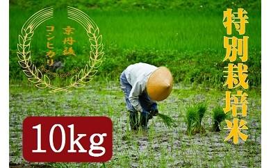 【ギフト用】令和3年度 特別栽培米京丹後コシヒカリ 10kg