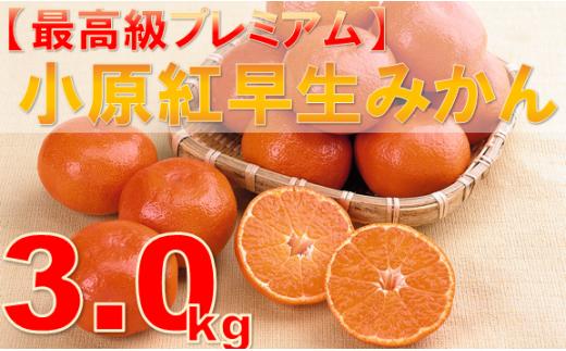 125 【最高級プレミアム】小原紅早生みかん 3kg