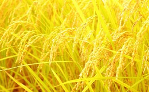 【定期便:全6回】「特A米」山麓の特別栽培米ヒノヒカリ<10kg×6回> SKM11