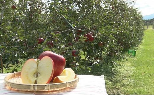 [№5675-1070]幻のりんごあいかの香り約3kg