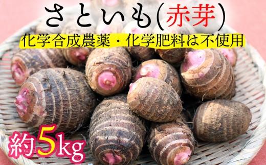 【先行予約】ほっくり美味しい♪化学合成農薬等不使用のサトイモ(赤芽)約5kg