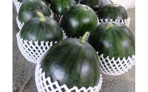 通常より皮が暗緑色~黒色の品種をお届けすることもあります。予めご了承下さい。