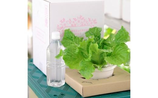 10-63 いまどれ野菜「テーブル菜園」選べる!2個セット