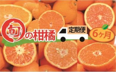 【全6か月定期便】 旬の柑橘類コース