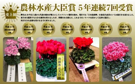 (先行予約)根本園芸  ピンク系 ガーデンシクラメン【5号】農林水産大臣賞受賞【10004】