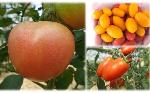 AP-4 【数量限定】大玉トマトとミニトマト(フラガール)のセット