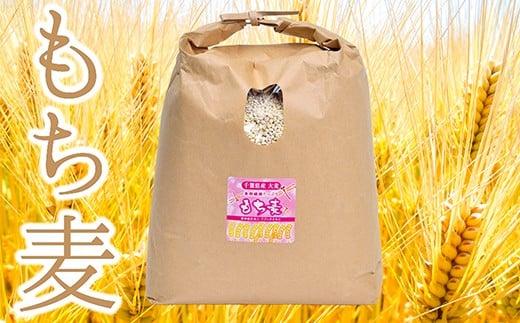 S-2 食物繊維たっぷりの「もち麦」横芝光町産4kg