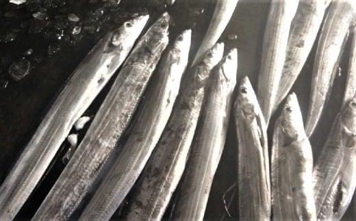 銀色に輝く鮮魚!太刀魚<タチウオ>約1.5kg