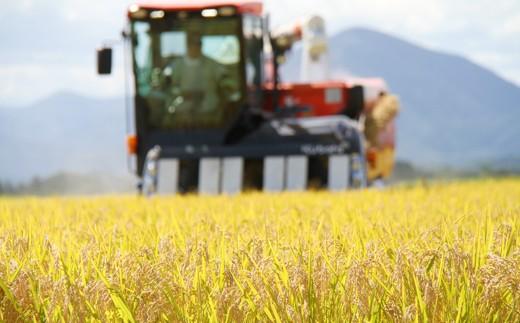 稲刈り時期、田んぼ一面黄金色☆美味しく育った証拠です!