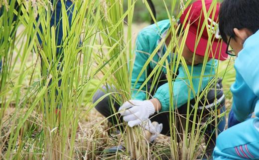 ファーム菅久では親子向けの農業体験も行っています。
