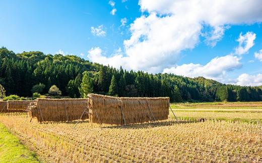 大野集落は、西和賀町沢内地区でも標高が低めで比較的稲作に適した土地