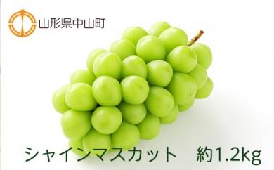 【2021年度産先行受付】シャインマスカット 約1.2kg