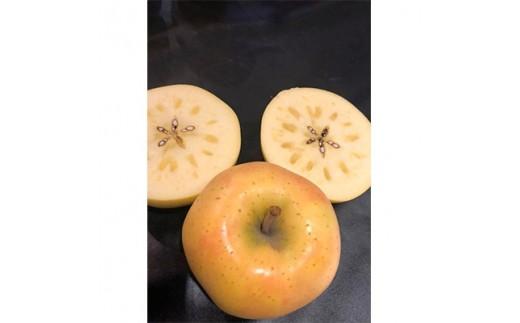 <希少品種>りんご「きみと」 約3kg (訳あり家庭用、糖度14度以上保証)_A1-6【1098511】