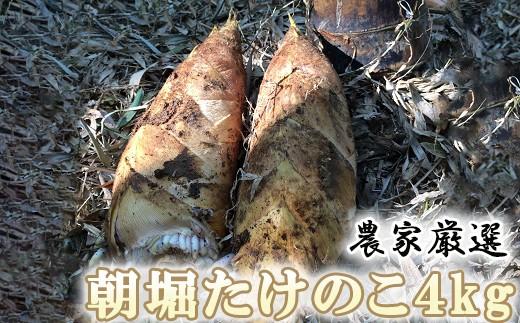 Y03-3 農家厳選「朝堀たけのこ」 4Kg予約