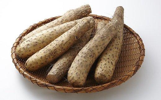 遠別産★栄養豊富な「吉兆 長芋 B品 (5kg)」