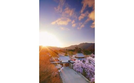 6 上田城千本桜と夕日(上田城跡公園)4月撮影