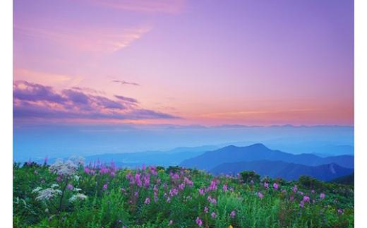 3 ヤナギランとシシウドと白馬岳など北アルプスの山並みと夕焼け(美ヶ原,思い出の丘)8月撮影
