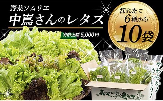 005-026 野菜ソムリエ中嶌さんのレタスセット