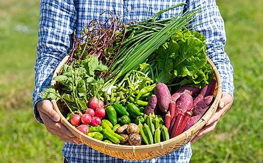 C-020.佐賀産季節の旬野菜B(15種類)