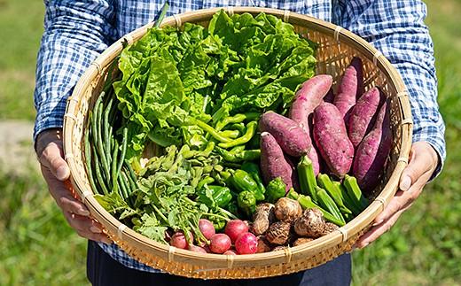 B-024.佐賀産季節の旬野菜(10種類)