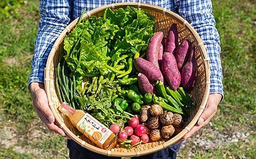 C-201.佐賀産季節の旬野菜10種類とドレッシング