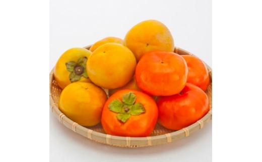 <2021年9~10月発送>太秋柿・早秋柿 食べ比べ 約6kg【1104420】