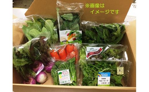 【年4回お届け!】四季の有機野菜色とりどりセット