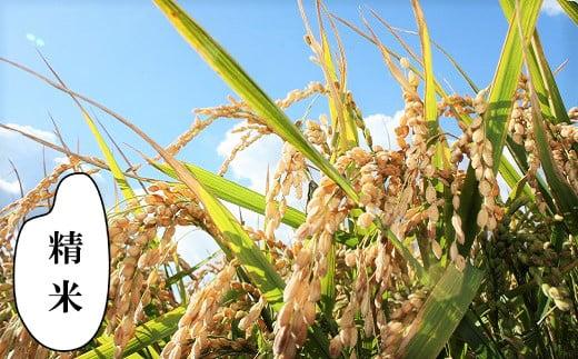 【精米12ヶ月定期便】特別栽培「きなうす米」ななつぼし5kg×12回 02_N014
