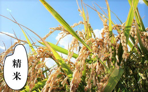 【精米12ヶ月定期便】特別栽培「きなうす米」ふっくりんこ5kg×12回 02_N017