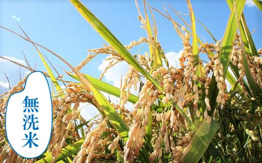 【無洗米12ヶ月定期便】特別栽培「きなうす米」ななつぼし5kg×12回 02_N015