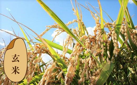 【玄米12ヶ月定期便】特別栽培「きなうす米」ななつぼし5kg×12回 02_N016