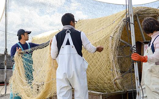 10月初旬になると網に種をつける作業が始まります