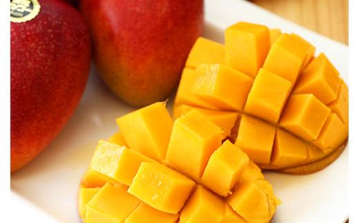 熊本県 合志産 弁天 マンゴー 1kg 2~3玉 アップルマンゴー