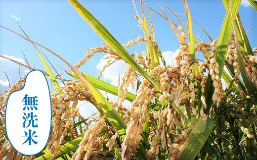 【無洗米12ヶ月定期便】特別栽培「きなうす米」ななつぼし10kg×12回 02_P006