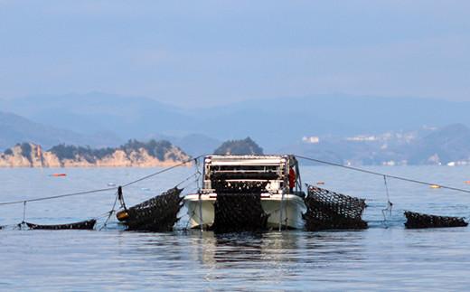 海苔の収穫風景。刈り取り専用の船で網の下をもぐるように進みます