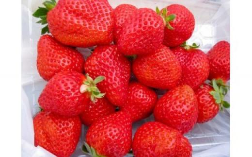 No.0222 先行予約 朝摘みいちごを一番に発送 美味しい福島のいちご