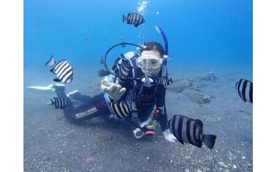 県内一長い海岸線を持つ沼津市・様々な場所で体験ダイビング