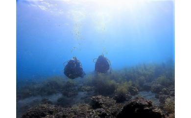 県内一長い海岸線を持つ沼津市・様々な場所でファンダイビング(2ダイブ)