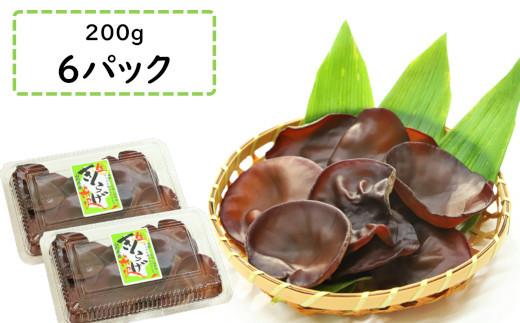 【6月~9月期間限定】米沢産 生きくらげ(200g×6パック) 無農薬栽培