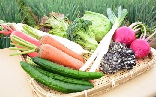 旬のラッキー7野菜セット(野菜7種詰合せ) 【11218-0114】