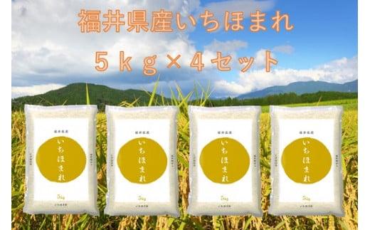 1164 【11月発送分】福井が生んだブランド米「令和2年福井県産いちほまれ」5kg×4