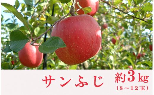 No.0151 りんご(サンふじ)(約3kg)