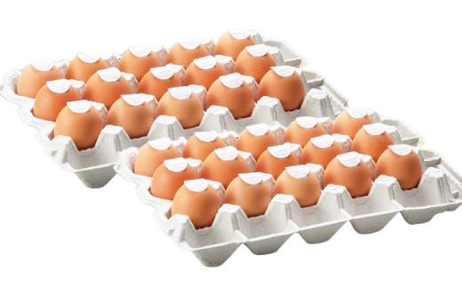 【定期便 偶数月 6回】卵かけごはん専用 あさひ卵 L玉サイズ×30個