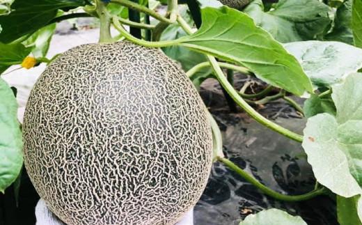 熊本県産 肥後グリーン メロン 約7kg(1玉1.6~2kg)