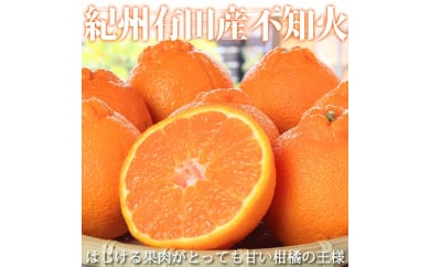 紀州有田産不知火(しらぬひ) 約5kg