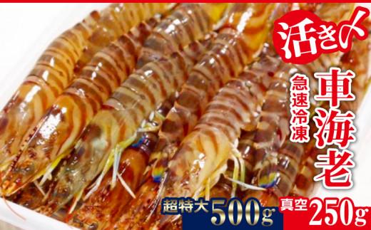 活き〆急速冷凍車海老:超特大+真空250g
