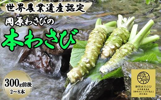 【世界農業遺産認定】西伊豆町の本わさび(岡原わさび)