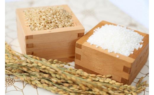 さかほまれ(福井県産認証特別栽培米)