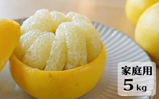 高知県産 土佐文旦 家庭用 5kg